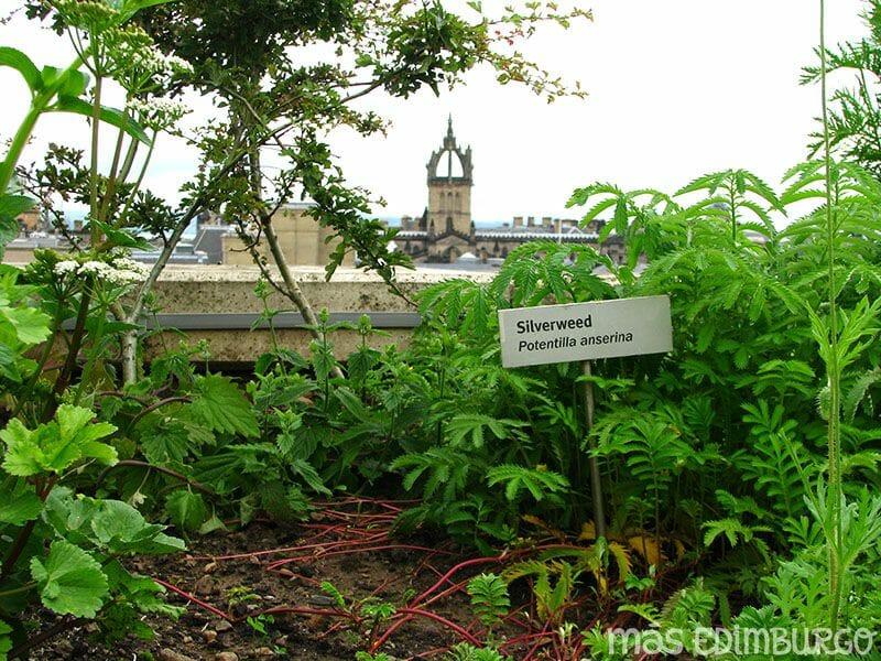 Terraza del Museo Nacional de Escocia Edimburgo (4)
