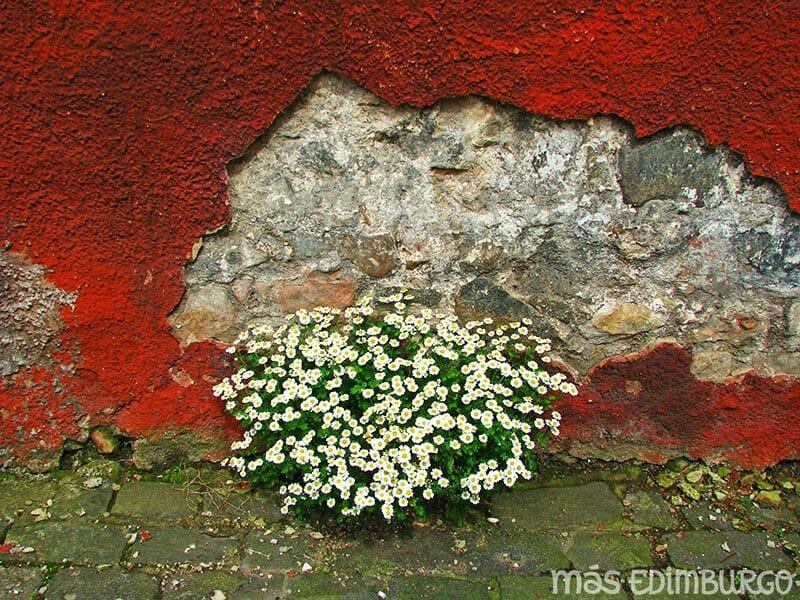 Jardines secretos de la Royal Mile Edimburgo 5