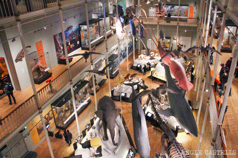 Visitar el National Museum of Scotland, en Edimburgo - La sala de animales