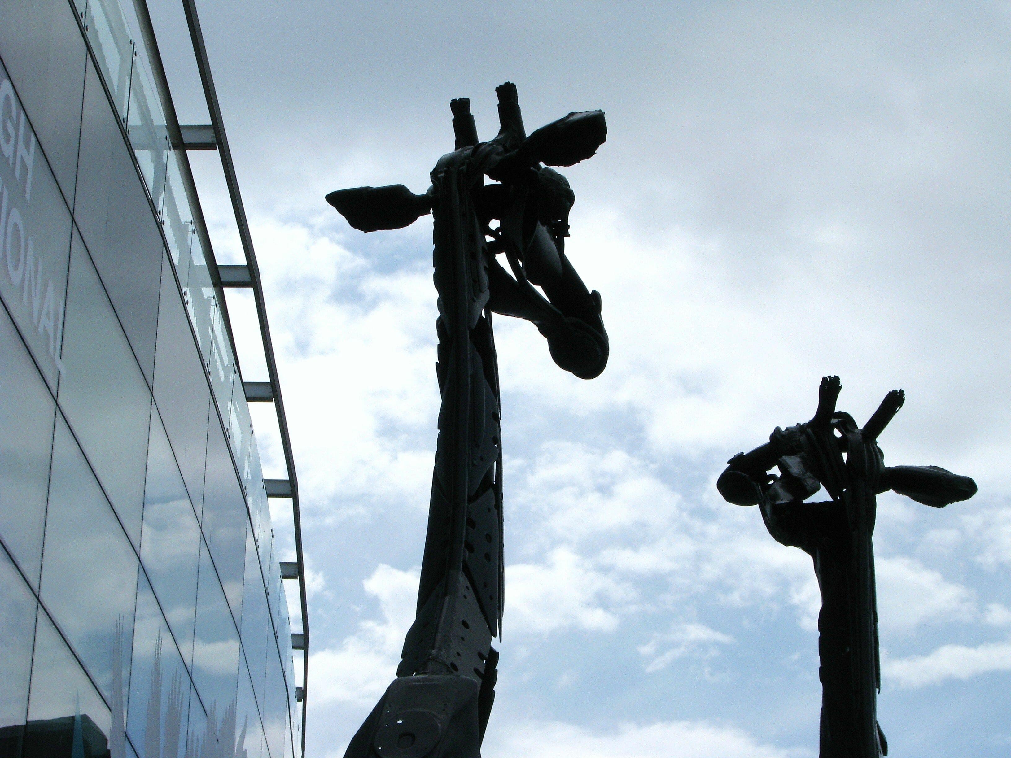 Martha y Gilbert, las jirafas de Edimburgo