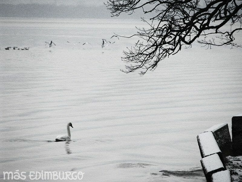 Visitar Glasgow, Lago Lomond y Aberfoyle (13)