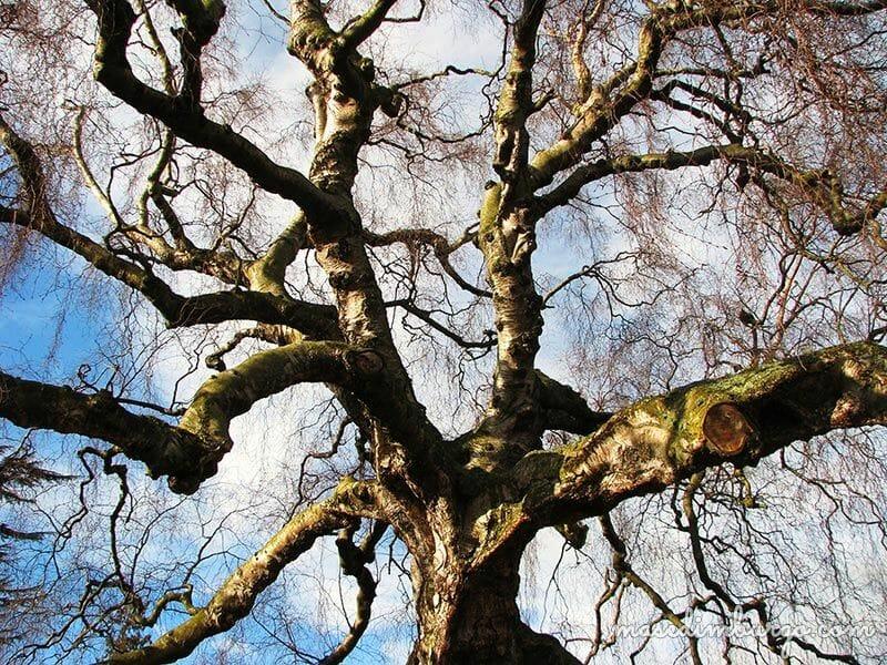 Visitar el Royal Botanic Garden Edimburgo