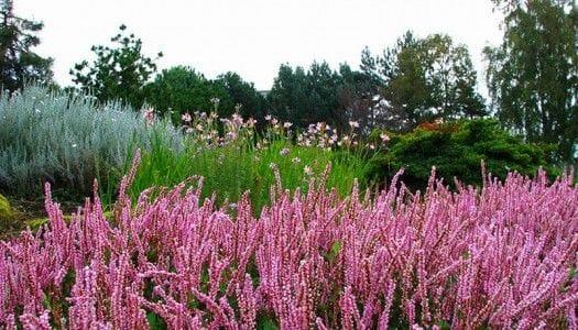 Baile de colores en el Jardín botánico de Edimburgo