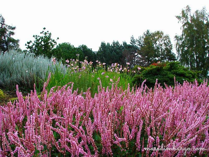 Visitar el Jardin botanico de Edimburgo