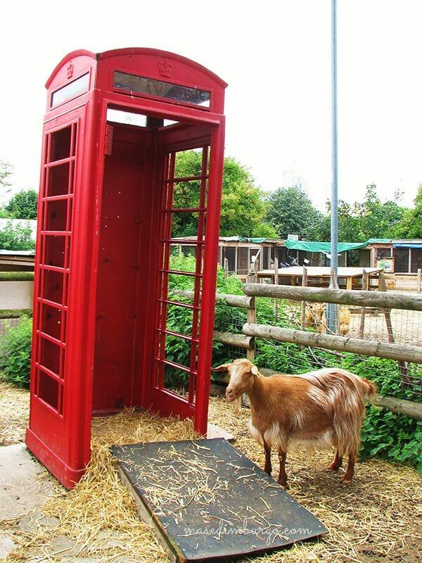 Spitalfields City Farm, una granja urbana en Londres Mas Edimburgo (2)