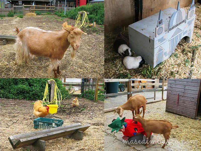 Spitalfields City Farm, una granja urbana en Londres Mas Edimburgo (5)
