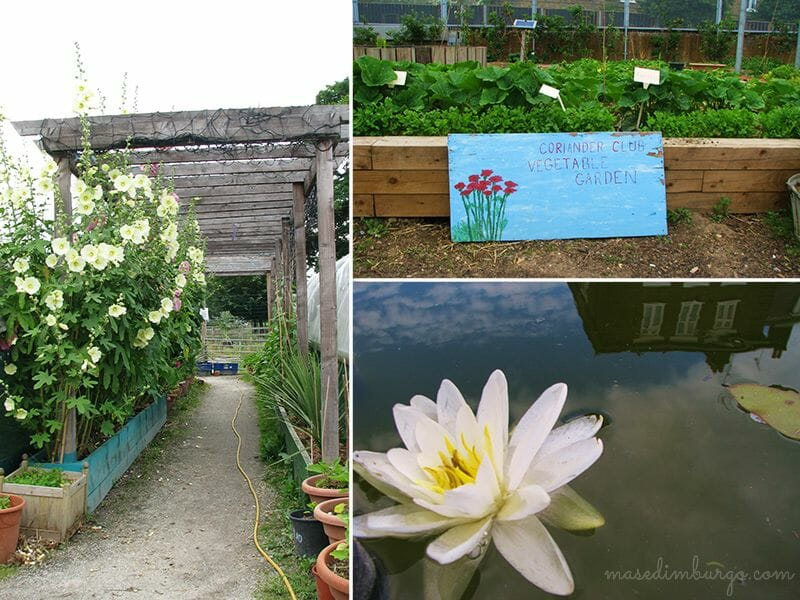 Spitalfields City Farm, una granja urbana en Londres Mas Edimburgo (9)