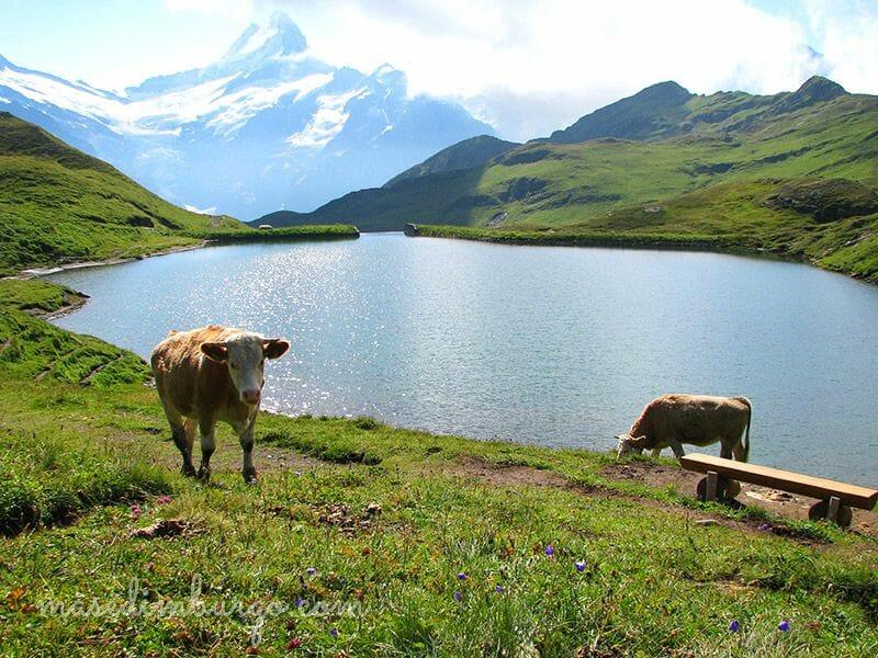 El lago suizo de Bachalpsee: entre valles y arroyos