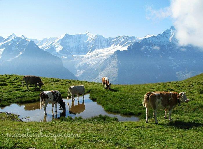 Lago Bachalpsee Suiza Mas Edimburgo 4
