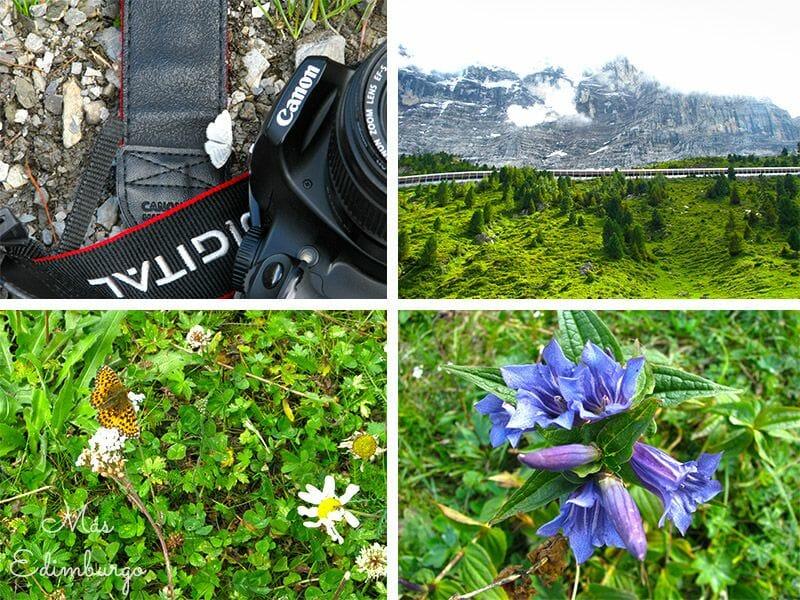 Jungfrau, Alpes Suizos, Mas Edimburgo (4)