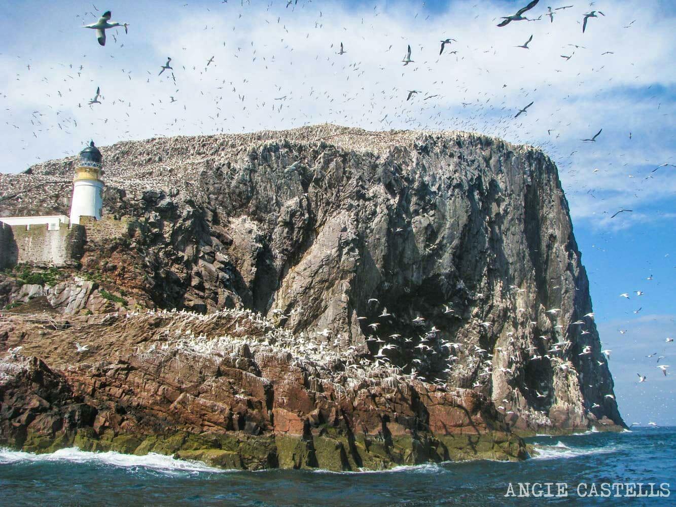 Barco-Bass-Rock-North-Berwick-Excursion-desde-Edimburgo-1500