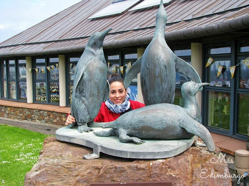 Que hacer en North Berwick Escocia Scottish Seabird Centre2