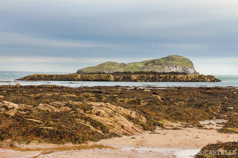 Qué ver en North Berwick - La isla de Craigleith