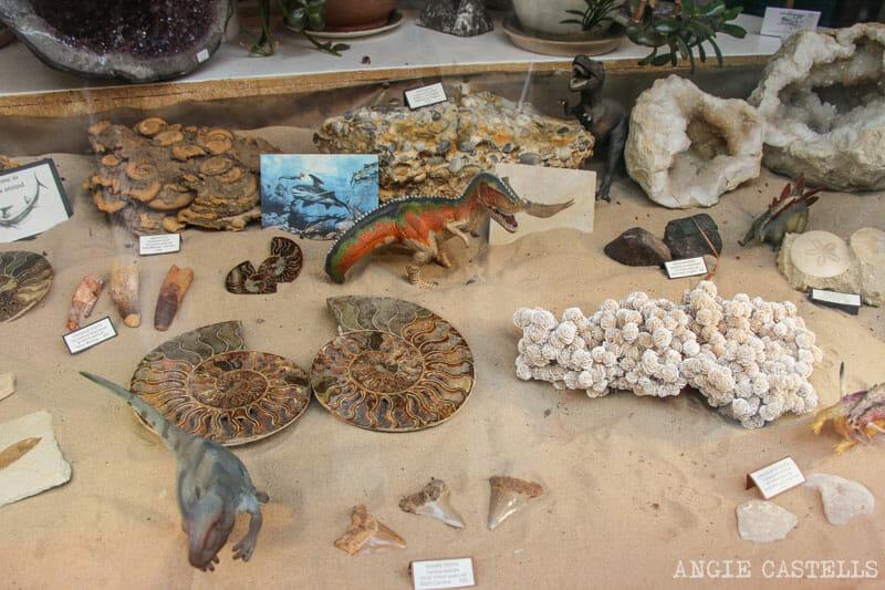Mejores tiendas Edimburgo Mr Woods Fossils
