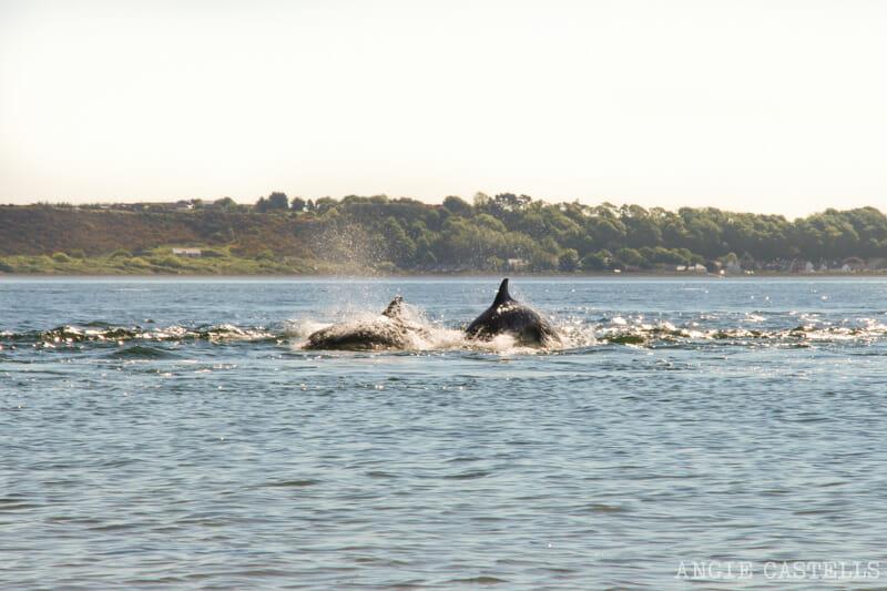 Ver delfines Escocia Chanonry Point excursion desde Inverness