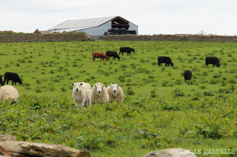 Ruta islas Orcadas Que ver en Orkney Mainland