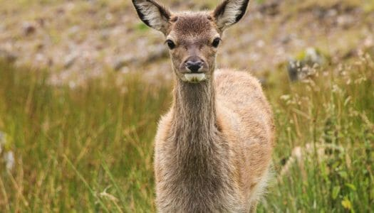 Turismo responsable con los animales y la naturaleza en Escocia