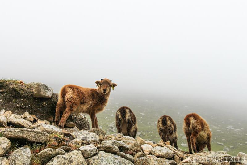 Visitar St Kilda, en Escocia - Cómo llegar y qué hacer en las islas