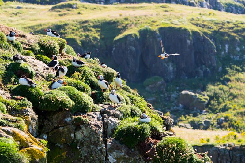 Qué hacer en Oban - Visitar isla de Mull, Iona y Staffa