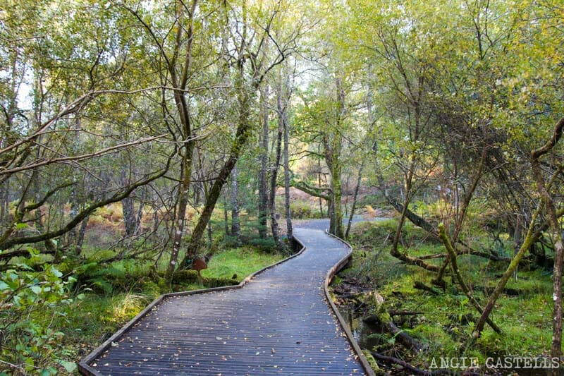 Ruta por el Loch Lomond y los Trossachs en 2 días - Bosques The Lodge