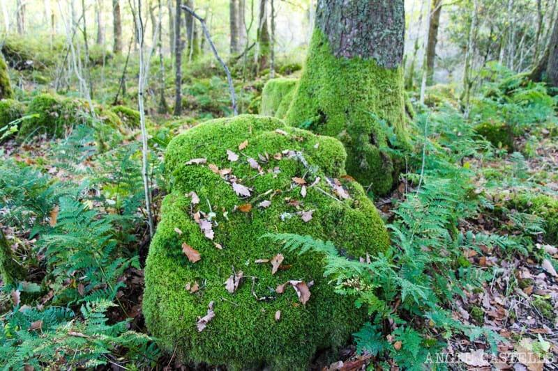 Bosques del Loch Lomond y Aberfoyle - La leyenda de Robert Kirk y las hadas