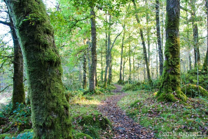 Bosques de Aberfoyle - Misterios de Escocia y leyendas